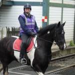 Irish Sports Horses