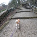 "Roma on her first training/socialising walk She says ""I can do steps after all"""