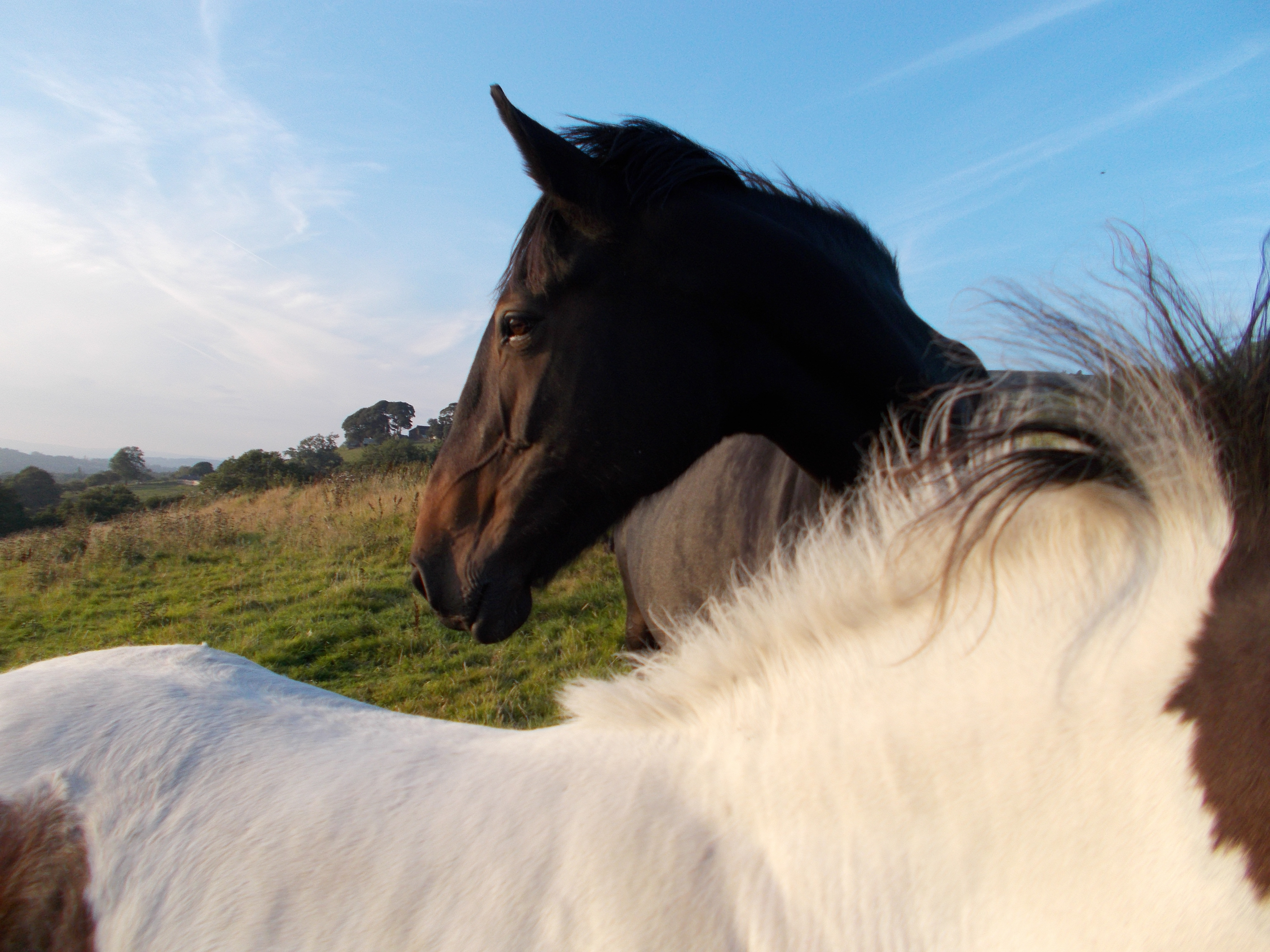 Horse Care ⋆ Love Your Animals