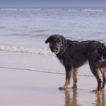 stock-photo-47814652-dog-running-on-teh-beach
